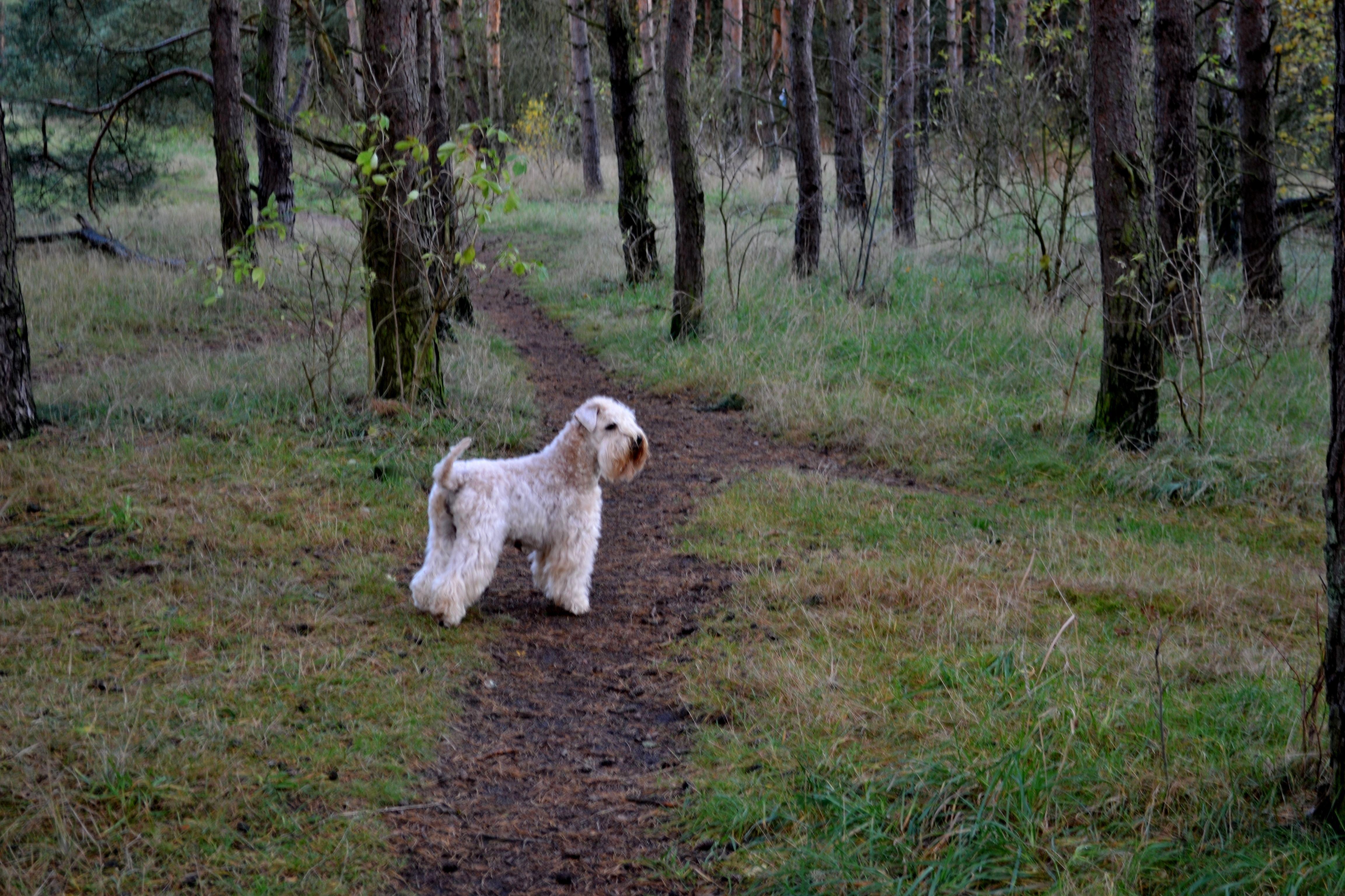 Lilly uppe i skogen